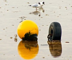 ShallowReflections (Hodd1350) Tags: black yellow reflections chains sony dorset lowtide sandbanks poole tyre buoy a77 sanderling blackheadedgull calidrisalba buoyant chroicocephalusribdibundus