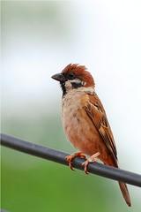 Nikon D3s sample image (Abang_Ngah) Tags: bird ed nikon view photos images ii sample everyone nikkor vr afs 70200mm f28g d3s abangngah httpwwwmylensdbcomnikond3ssamplephoto