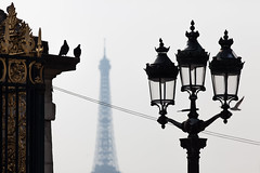 Typical Paris (Hkan Dahlstrm) Tags: paris france tower lamp silhouette ledefrance tour pigeon eiffel cropped f56 fr frankrike fav10 saintgermainlauxerrois 2013 ef200mmf28lusm canoneos5dmarkii sek 9929032013145832