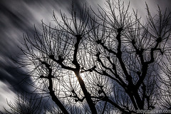 moonlight madness (SkowerPhotography) Tags: trees nature clouds moonlightphotography shayneskower