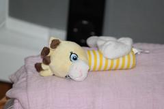 Rattle Toy (John Drake Flickr) Tags: rattle babytoy