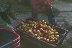 Apples (dichohecho) Tags: film analog somerset apples analogue pentaxmesuper fujisuperia400 ciderpressing roll59 dichohecho