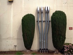 Frankenbush (misterbigidea) Tags: street city trees urban white abstract detail building tree green metal wall architecture landscape bush view mechanical pair pipes twin trunk trim puffy stockton shrubs conduit shrubbery seeingdouble shapely robotic muttonchops oddmanout