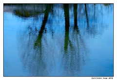 Trees reflected (cienne45) Tags: trees nature alberi cienne45 carlonatale natura natale riflessi