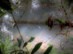 Morning Light (trins) Tags: morning trees light sky fern reflection nature water beautiful grass leaves oregon moss branches through liked naturalabstract beautifullighting beautifulreflection beautifulreflections naturesabstract cloudywater beautifulmorninglight