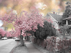 The Arrival of Spring series (ZedZap Photos) Tags: pink spring blossom sakura tatot