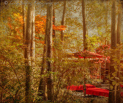 The Tea Garden (pixellesley) Tags: autumn trees sunlight texture japan forest woodland garden relaxing parasol benches teahouse tranquil respite tatot magicunicornmasterpiece kimklassen
