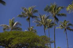 Honolulu city View (caz76KOBE) Tags: 2016 2016caz76 2016hawaii canon eos eos6d hawaii honolulu landscape landscapephotography landscapes oahu resort travel usa ze carlzeiss zeiss carlzeissmakroplanart250ze mp50 makroplanar cosina     kalakaua blue bluesky