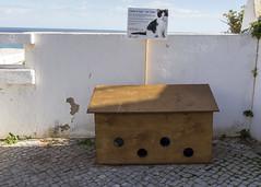 Cat Hotel (Hans van der Boom) Tags: europe portugal algarve vacation holiday albufeira wood cat hotel pt