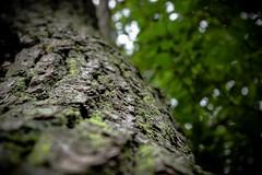 tree. (Nik Osborne) Tags: tree nature bark moss green summer dark moody dof depth detailed