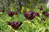 DSC_3447.jpg (kitlo59) Tags: vegadalen blomster myrland ute