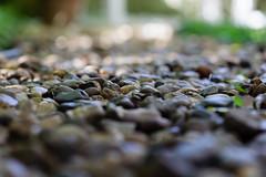 Low PoV - 1 (MFMarcelo) Tags: sopaulo brasil nature stone garden bokeh texture pov lowpov green dof canon eos 5diii ef100mm