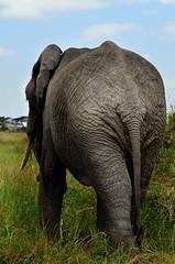 PWS_6847 (paulshaffner) Tags: dorobo safaris dorobosafaris serengeti safari studyabroad education abroad tanzania penn state pennstate biology pennstatebiology