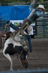 Tak_CPRA_2016-5080 (takahashi.blair) Tags: coachtak rodeo blairtakahashitakahashiblaircoachtakblairtakahashi pincher creek barrel racing bronc rope bareback steer bullriding