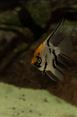 Acuario Agosto 2016 (54) (Fernando Soguero) Tags: acuario zaragoza acuariodezaragoza aragn turismo aquarium nikon d5000 fsoguero fernandosoguero