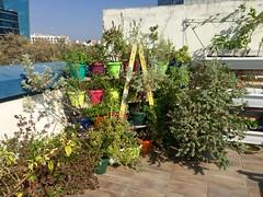 Herb Corner (Assaf Shtilman) Tags: garden corner pots plants ladder sage mint herb