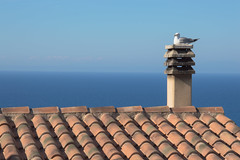 343/365 Room with view (darioseventy) Tags: gabbiano seagull mare seaside sea animal animale uccello bird roof tetto summer summertime estate above sopra minimal minimalism minimalismo