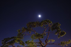 The moon on the pine trees (Yeong-N) Tags:            asia korea southkorea incheon dongincheon jungguoffice night tree trees pinetree pinetrees longexposure treatyport openportarea chuseok thechuseokfullmon fullmoon           light moonlight landscape landscapes