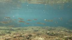 Fish (edlondon27) Tags: menorca balearics spain