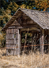 wire and barn (marneejill) Tags: derelict barn barbed wire rust autumn fall old dry grass changing leaves shakes