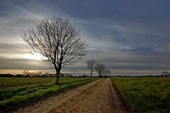 Tuddenham Landscape (DaveJC90) Tags: road city blue winter light sunset shadow sky cloud sun sunlight cold colour detail tree green field dark landscape suffolk colours afternoon view path walk magic sunny stmartin sharp nights 1001nights footpath 1001 sharpness magiccity tuddenham thegalaxy 1001nightsmagiccity
