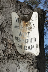 Tree slowly eating sign (AndersHolvickThomas) Tags: california tree sign oak antique stanford overgrowth lakelagunita