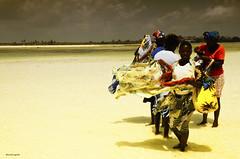 Kenya - Watamu - Veli (adriano1281) Tags: africa sea wild sky verde green nature smile children reflex nikon mare child kenya bambini natura cielo sorriso terra job bambino d7000