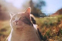 Curiosity (Kait Dean) Tags: summer sun film cat happiness f100 curiosity ektar100 kaitdean