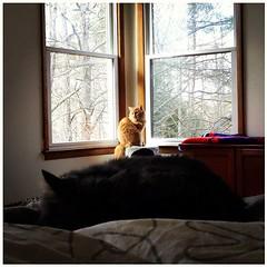 upload (merrickball) Tags: cat square kitten lofi squareformat finnegan stinks iphoneography instagramapp uploaded:by=instagram foursquare:venue=4bd48211637ba593f5ccf470