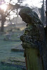 Celestial (Skink74) Tags: uk morning england sun green 20d monument cemetery statue stone angel early moss memorial frost dof bokeh hampshire canoneos20d graves memory lichen churchyard algae otterbourne nikkor35f14 nikkor35mm114ai