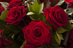 Bouquet of Roses (Giuseppe Baldan) Tags: