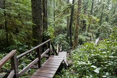 Rainforest Trail - Pacific Rim - Vancouver Island (Marc Shandro) Tags: trees canada nature wet forest landscape moss rainforest solitude bc outdoor britishcolumbia nopeople vancouverisland vegetation boardwalk civilization wilderness moist unspoiled