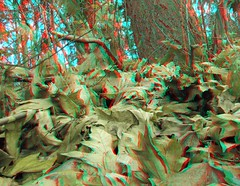 IMG_5159ForestLeaves (EdwardMitchell) Tags: red canon lumix stereoscopic 3d spokane cyan anaglyph powershot sx1 gh2