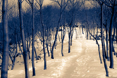 Forest (Yoonki Jeong) Tags: mountain snow tree forest way path korea trail   gyeonggi     bucheon