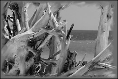 Nature's Beach Art (robert (Bobby)powell) Tags: statepark usa gulfofmexico nature landscape yahoo google flickr gulf florida driftwood fl bing whimsical leecounty waterscape naturephotography southwestflorida freelancephotographer floridabeaches loverskeystatepark bonitaspringsfl leecountyfl flickriver leecountyflorida flickrfromyahoo robertbobbypowell imagesofbonitaspringsflorida aolimagesofflorida imagesofflorida