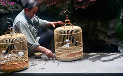 57/365 (jadeseguela) Tags: world china travel trees portrait bird art birdcage beautiful birds shirt hair asian azn nose colorful hand shanghai chinese beijing cage xian hangzhou 365 365project