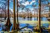 Swamp Vista (Sky Noir) Tags: park county travel trees usa nature photography moss state gates united north spanish swamp wetlands carolina cypress states knees merchants millpond skynoir