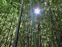 (TheJudge310) Tags: california usa zoo unitedstates tranquility bamboo fresno