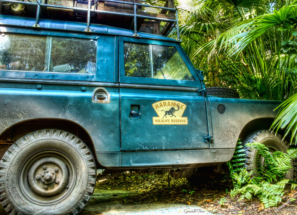 The World S Best Photos Of Animalkingdom And Cars Flickr Hive Mind