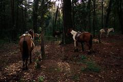 Caballos de Montebello (David A Córdova M) Tags: trees light shadow horses horse luz canon mexico atardecer caballos photography photo woods foto arboles picture bosque fotografia chiapas sombras 60d faunayflora davidacordovam