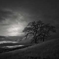 two trees on a hill (nlwirth) Tags: light grass clouds hill infrared yup twotrees infraredconvertedcamera nlwirth