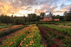 Sweet Summer Memories - Burning Sky on Rosendal's Garden (Maria_Globetrotter) Tags: park uk travel pink flowers summer english tourism beautiful field canon garden outside colorful day cloudy sweden stockholm united rosa kingdom august best fields sverige blommor av svensk 2012 sommar djurgrden trdgrd bst vacker 550d 1585 engelsk blomsterng mariaglobetrotter