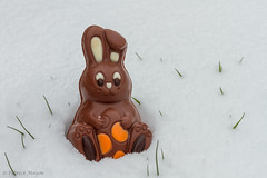 Easter 2013. (Patrick Mayon) Tags: snow cold rabbit bunny grass easter chocolate stock neige froid lapin chocolat paques pques herbes 2013