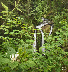 Triple Falls (Laura A Knauth) Tags: flowers summer brown white laura flower green nature leaves oregon creek forest river landscape photography waterfall spring stream pacific northwest branches wideangle columbia columbiariver waterfalls pacificnorthwest gorge brook bushes knauth lauraknauth