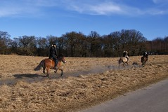 Horsepower (osto) Tags: denmark europa europe sony zealand dslr scandinavia danmark a300 sjlland  osto alpha300 osto april2013