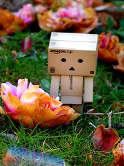 Danbo finds a fallen flower, take two. (claudiamontano) Tags: life pink flowers orange flower green rot nature rotting floral grass amazon natural samsung fallen danbo wb150f
