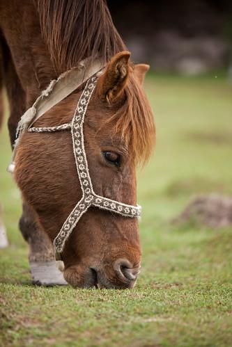 Our trek horses