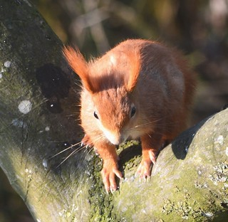Eichhörnchen, NGIDn72369436