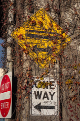 Sign for Trolley that Once Moved People along Seattle Waterfront (Lee Rentz) Tags: road seattle usa overgrown sign yellow america washington vines support highway crossing waterfront northwest trolley pillar ivy diamond viaduct caution pacificnorthwest northamerica pugetsound column washingtonstate elliotbay warningsign alaskanwayviaduct vining 2013 stateroute99