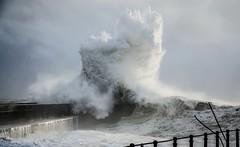 Tempestad en el Atltico (Rosa De Cyan) Tags: portugal azul mas marejada olas gaviota oporto atlntico pjaro oceano espuma tempestad
